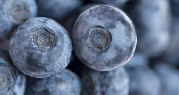 blueberries00
